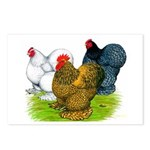 Assorted Cochins Postcards (Package of 8)