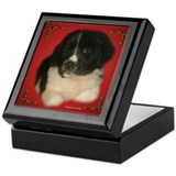 Newfie Pup Christmas Keepsake Box