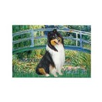 Bridge / Collie (tri) Rectangle Magnet (10 pack)