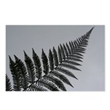 silver fern Postcards (Package of 8)