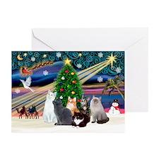 Xmas Magic / Six Cats Greeting Cards (Pk of 20)