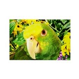 Painting Amazon Parrot Rectangle Magnet