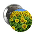 Sunflower Cluster Button