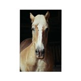 Cute Draft horse Rectangle Magnet (10 pack)
