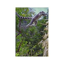 Leaping Lemur Rectangle Magnet (10 pack)