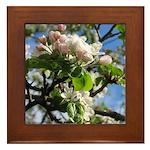 Apple Blossoms Framed Tile