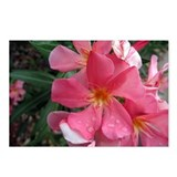 Pink Oleander Postcards (Package of 8)