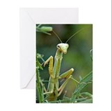 Mantis 475 Greeting Cards (Pk of 20)