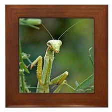 Mantis 475 Framed Tile