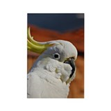 """COCKATOO"" Rectangle Magnet (100 pack)"