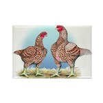 Cornish Chickens WLRed Rectangle Magnet