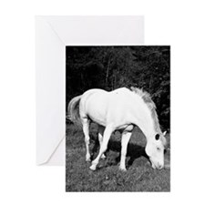 WhiteHorse02 Greeting Card