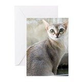 Singapura Cats Greeting Cards (Pk of 20)