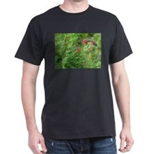 Ruby-throat and Cypress Vine T-Shirt