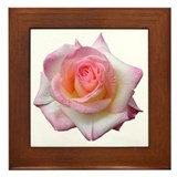 Diana - Rose Framed Tile