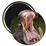 "Hippo - Open Wide - 2.25"" Magnet (100 pack)"