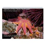 Starfish of the Pacific North 2013 Calendar v2