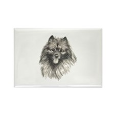 Keeshond Rectangle Magnet (10 pack)