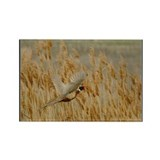 Pheasant Flight Rectangle Magnet (10 pack)