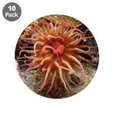 "Helaine's Sea Anemone 3.5"" Button (10 pack)"