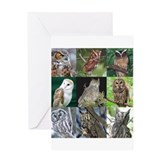 Fearful owl Greeting Card