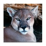 Cougar Decorative Tile/Coaster