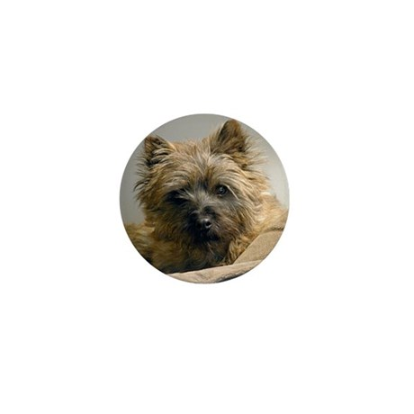Pensive Cairn Terrier Mini Button