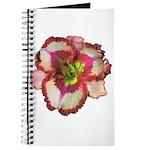 Red Ruffled Daylily Journal