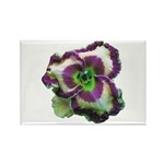 Purple Eye & Edge Daylily Rectangle Magnet (10 pac