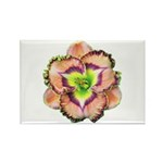 Lavender Pink Daylily Rectangle Magnet (10 pack)