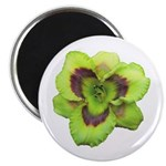 Gold w/ Purple Eye Daylily Magnet