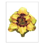 Peach Double Daylily Small Poster