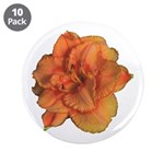 Coral Double Daylily 3.5