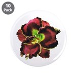 Dark Purple Daylily 3.5