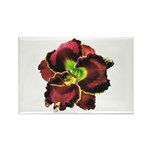Dark Purple Daylily Rectangle Magnet (10 pack)