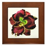 Dark Purple Daylily Framed Tile