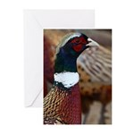 Ringtail Pheasant Greeting Cards (Pk of 10)