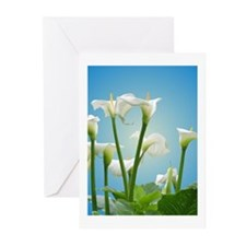 Calla Lilies Greeting Cards (Pk of 10)