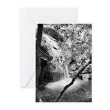"""White Tree"" Greeting Cards (Pk of 10)"