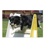 Unique Collie Postcards (Package of 8)