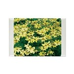 Coreopsis Moonbeam Rectangle Magnet (10 pack)