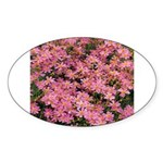 Coreopsis Rose Oval Sticker