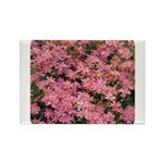 Coreopsis Rose Rectangle Magnet