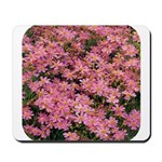 Coreopsis Rose Mousepad