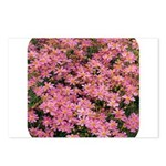 Coreopsis Rose Postcards (Package of 8)