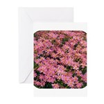 Coreopsis Rose Greeting Cards (Pk of 20)