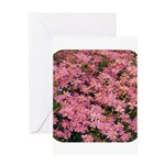 Coreopsis Rose Greeting Card