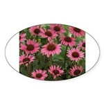 Echinacea Magnus Oval Sticker