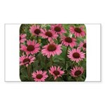 Echinacea Magnus Rectangle Sticker