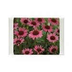 Echinacea Magnus Rectangle Magnet